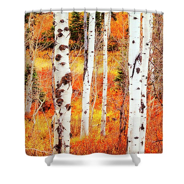 Shower Curtain featuring the photograph Autumn Aspens by David Millenheft
