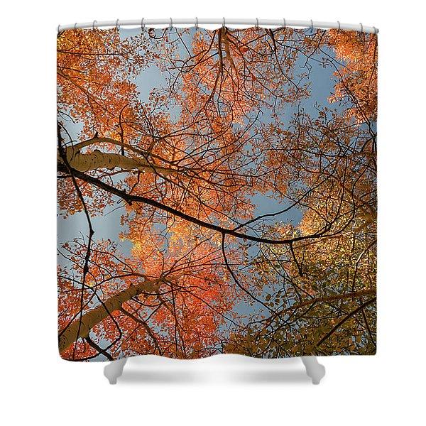 Autumn Aspens In The Sky Shower Curtain