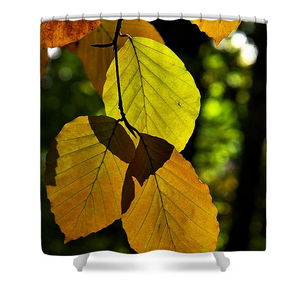Autumn Beech Tree Leaves Shower Curtain