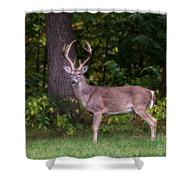 Shower Curtain featuring the photograph Autumn Buck by Andrea Silies