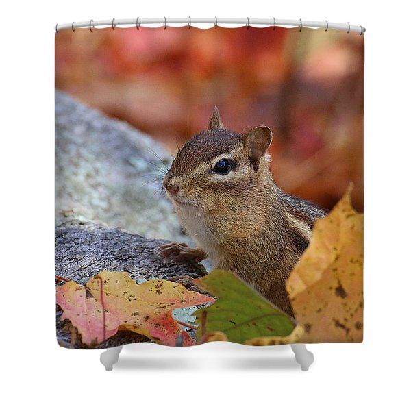 Shower Curtain featuring the photograph Autumn Chipmunk by William Selander