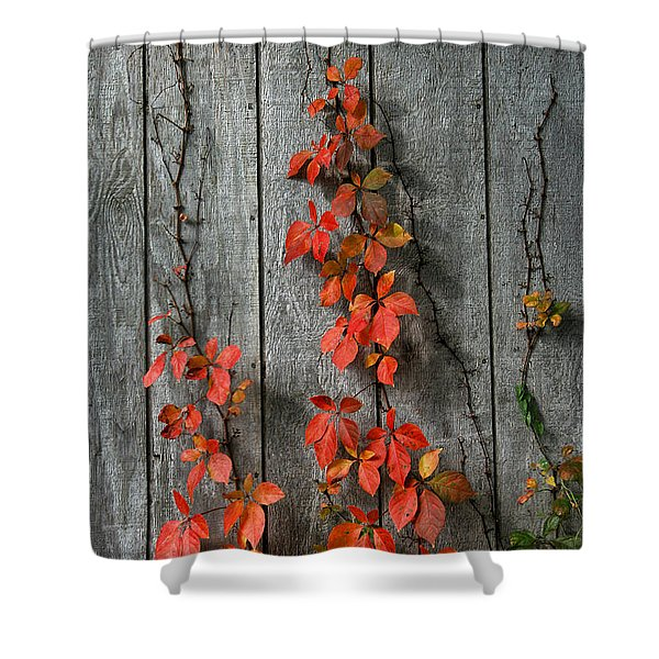 Shower Curtain featuring the photograph Autumn Creepers by William Selander