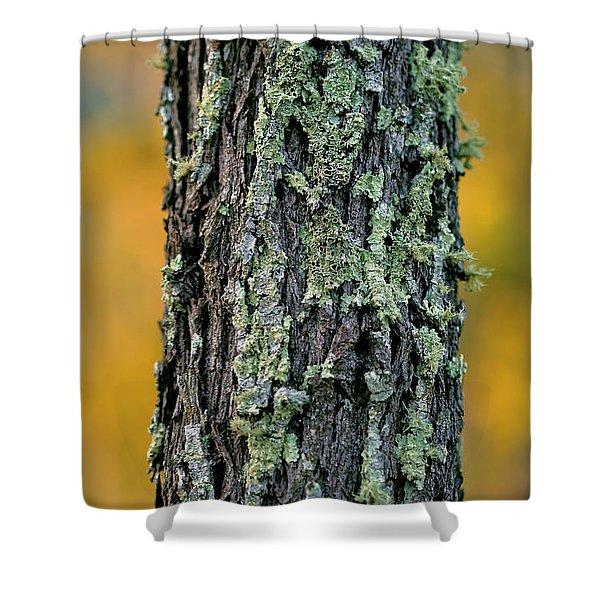 Autumn Ironbark Shower Curtain
