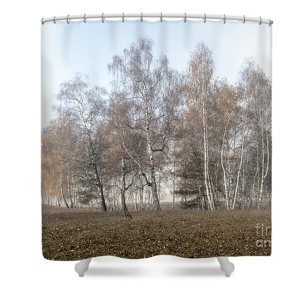 Autumn Landscape In A Birch Forest With Fog Shower Curtain