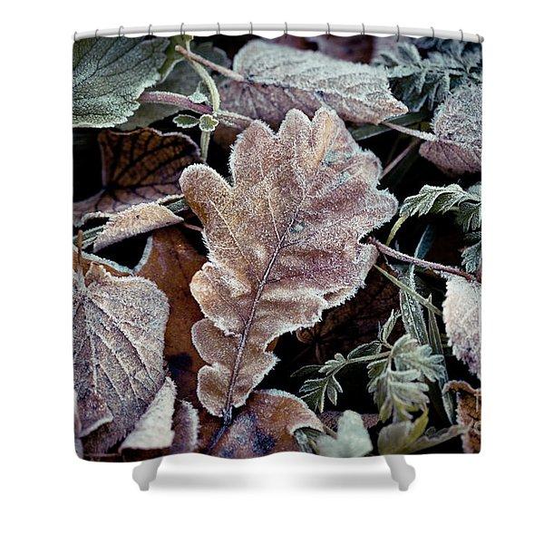 Shower Curtain featuring the photograph Autumn Leaves Frozen Artmif.lv by Raimond Klavins