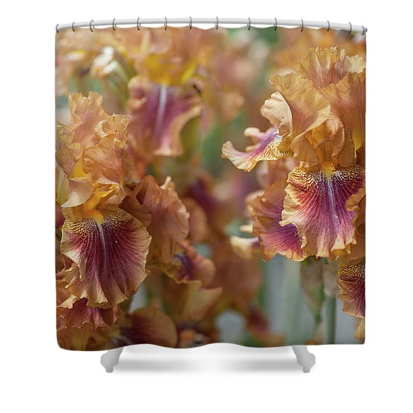 Autumn Leaves Irises In Garden Shower Curtain