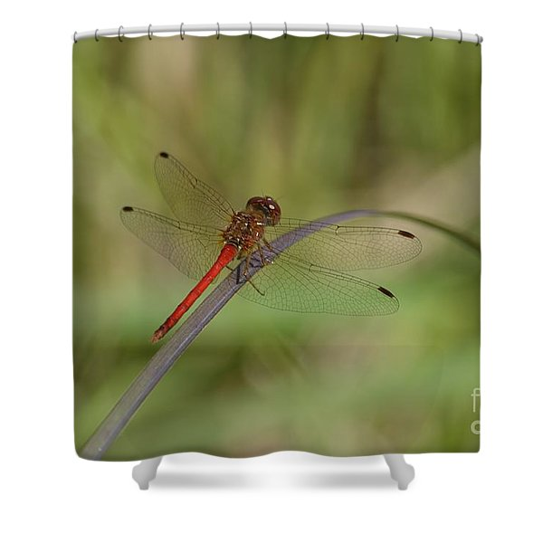 Autumn Meadowhawk Shower Curtain