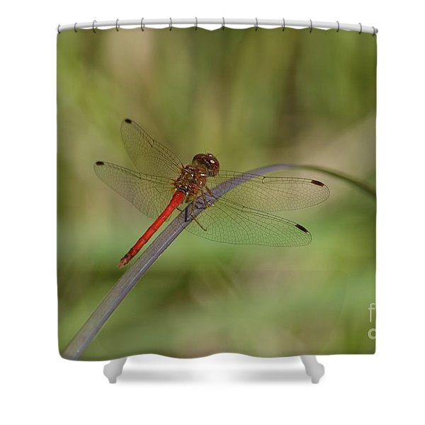 Autumn Meadowhawk Shower Curtain