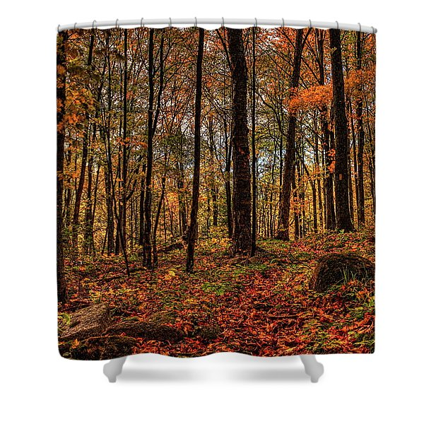 Autumn On The Ice Age Trail Shower Curtain