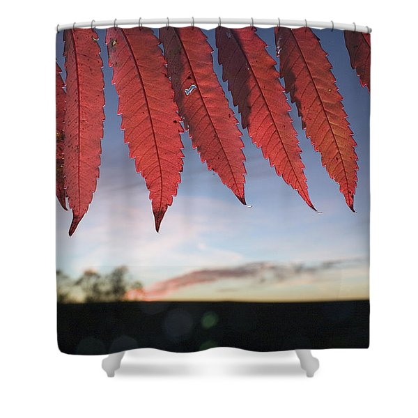 Autumn Red Sumac Leaves Shower Curtain