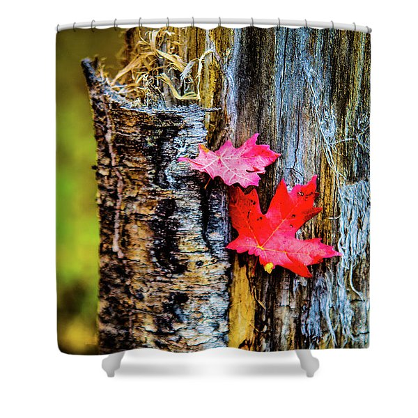 Autumn Silence Shower Curtain