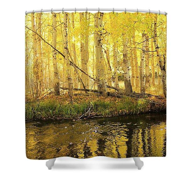 Autumn Soft Light In Stream Shower Curtain
