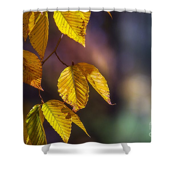 Autumn Sonata Shower Curtain