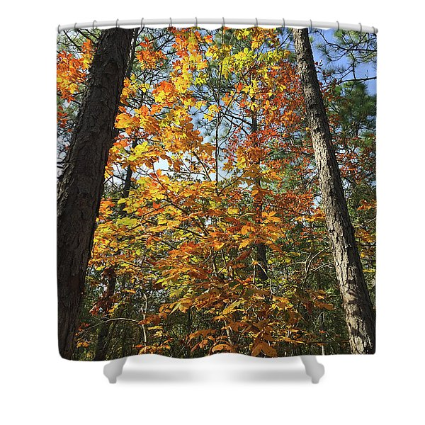 Autumn Sunday Shower Curtain