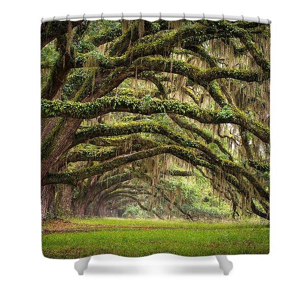 Avenue Of Oaks - Charleston Sc Plantation Live Oak Trees Forest Landscape Shower Curtain