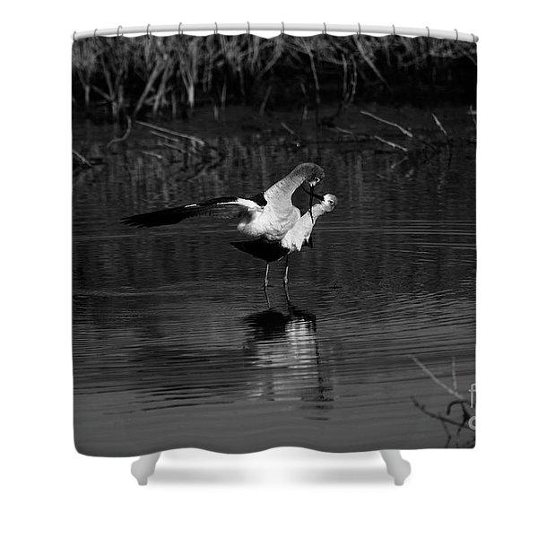 Avocet Courtship Dance 24x36 Canvas Print On Sale Shower Curtain