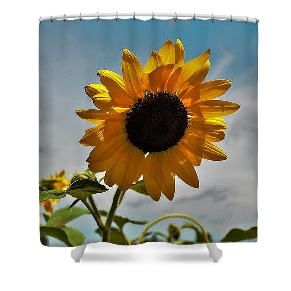 2001 - Awakening Sunflower Shower Curtain