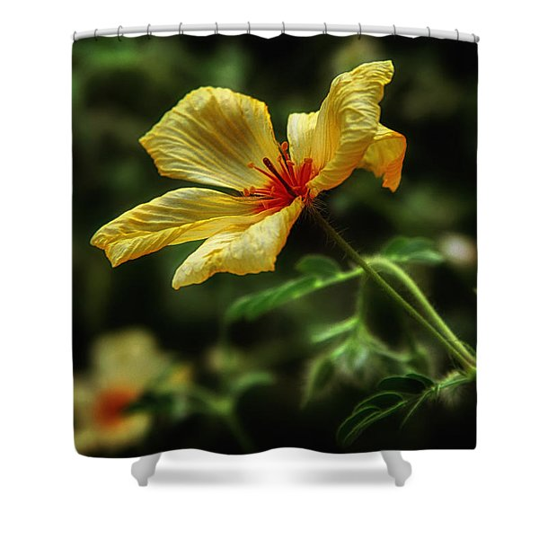 Az Poppy Shower Curtain