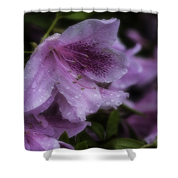 Azalea In Bloom Shower Curtain