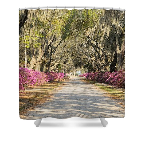azalea lined road in Spring Shower Curtain