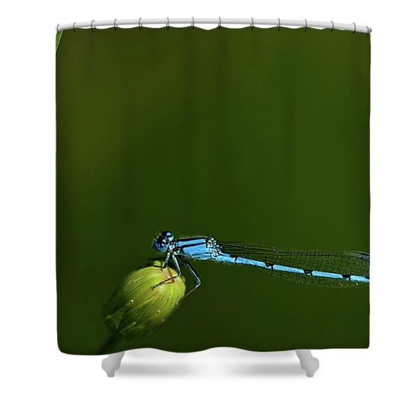 Azure Damselfly-coenagrion Puella Shower Curtain