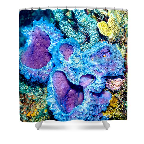 Shower Curtain featuring the photograph Azure Vase Sponges by Perla Copernik