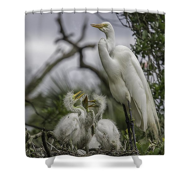 Babies In The Nest Shower Curtain