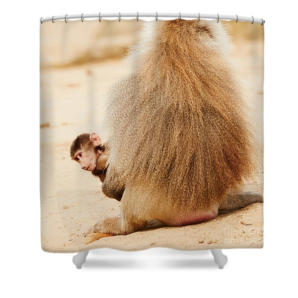 Baboon With A Baby  Shower Curtain
