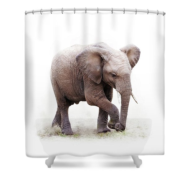 Baby African Elephant Isolated On White Shower Curtain