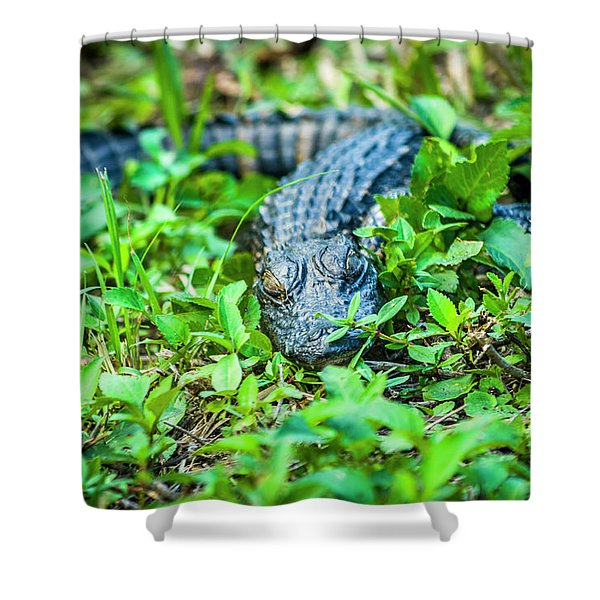 Baby Alligator Shower Curtain