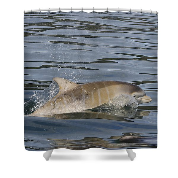 Baby Bottlenose Dolphin - Scotland  #35 Shower Curtain
