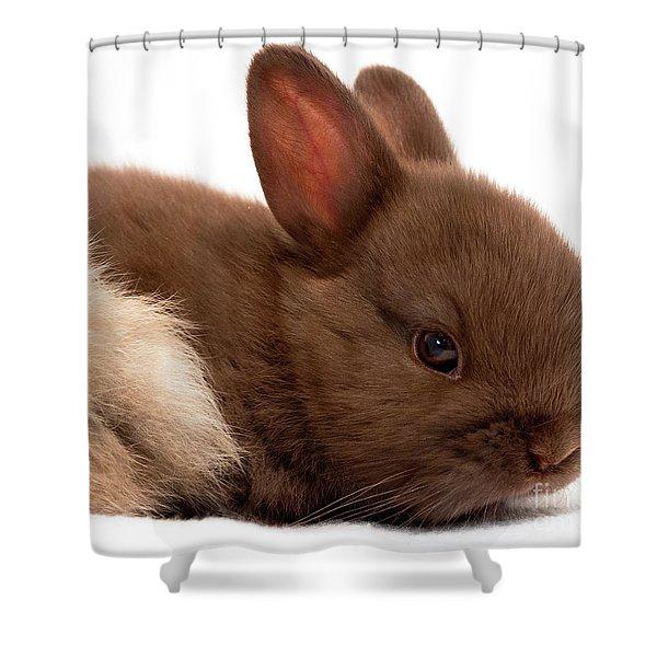Baby Bunny  #03074 Shower Curtain