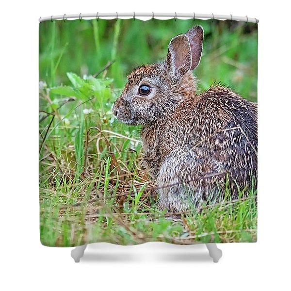 Baby Bunny Shower Curtain