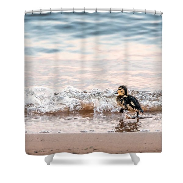 Baby Duck Running On A Beach Into The Waves Shower Curtain
