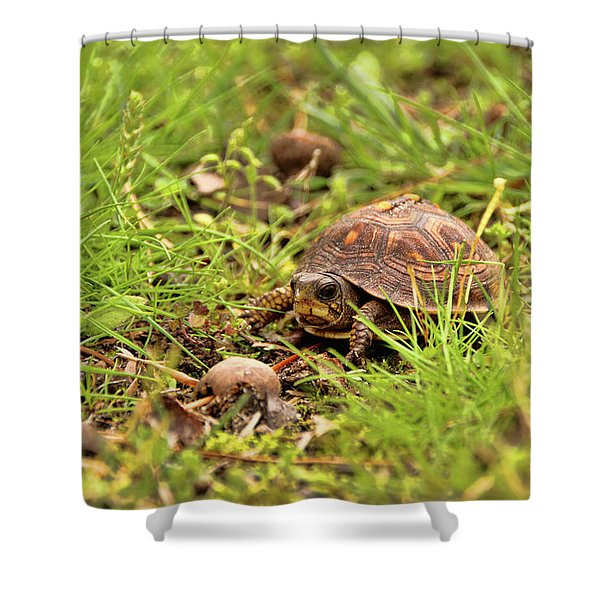 Baby Eastern Box Turtle Shower Curtain