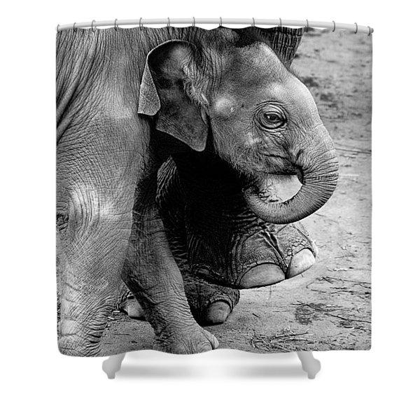 Baby Elephant Security Shower Curtain