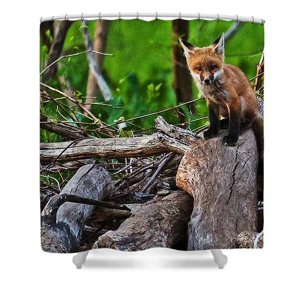 Baby Fox Shower Curtain
