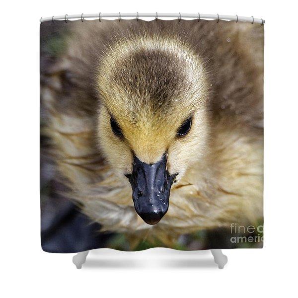 Baby Goose Portrait Shower Curtain