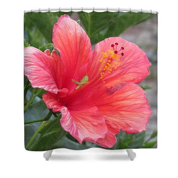 Shower Curtain featuring the photograph Baby Grasshopper On Hibiscus Flower by Nancy Nale