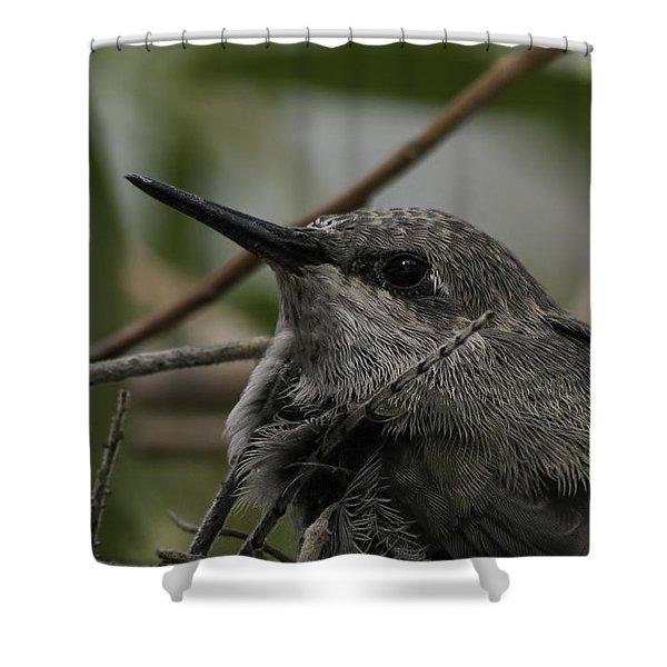 Baby Humming Bird Shower Curtain