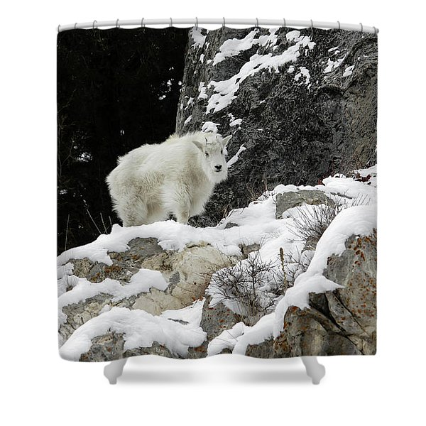 Baby Mountain Goat Shower Curtain