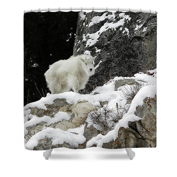 Shower Curtain featuring the photograph Baby Mountain Goat by Ronnie and Frances Howard