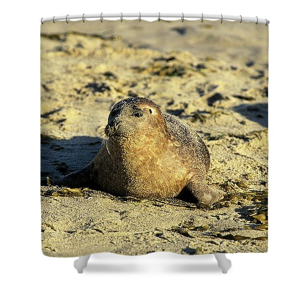 Baby Seal In Sand Shower Curtain