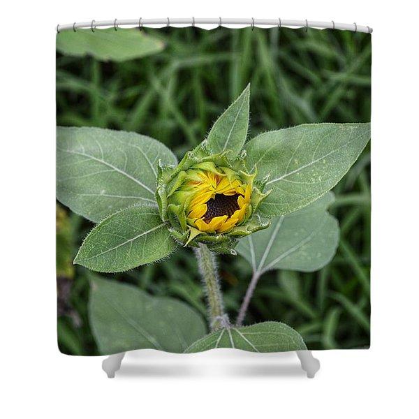 Baby Sunflower  Shower Curtain