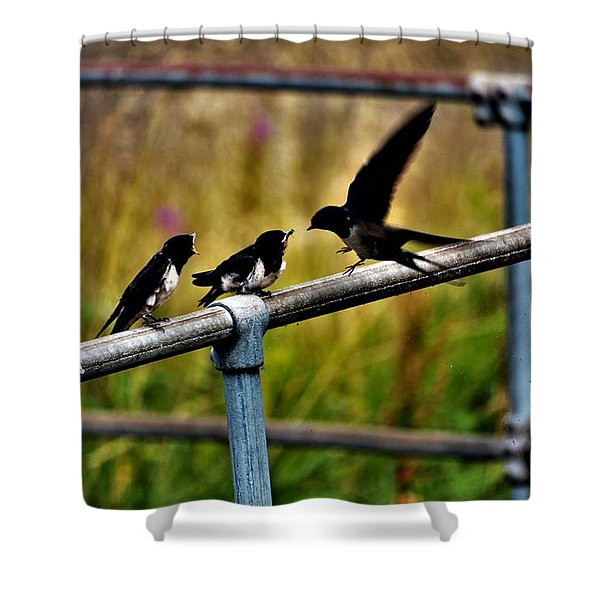 Baby Swallows Feeding Shower Curtain