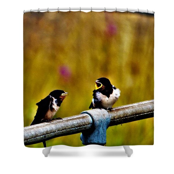 Baby Swallows Shower Curtain