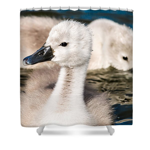 Baby Swan Close Up Shower Curtain