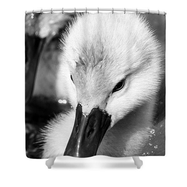 Baby Swan Headshot Shower Curtain