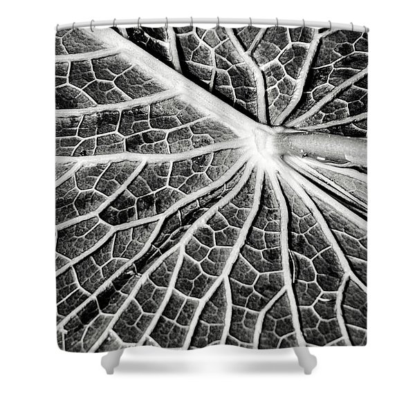 Back Of A Water Lily Pad Shower Curtain