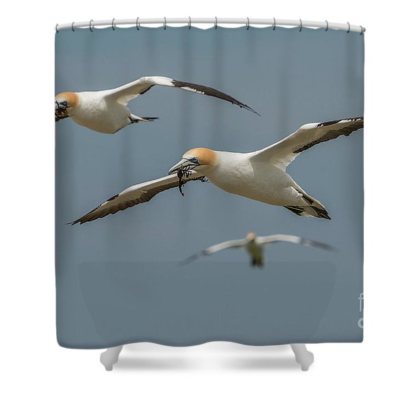 Back To The Colony Shower Curtain